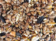 Buy the quality garden bird food